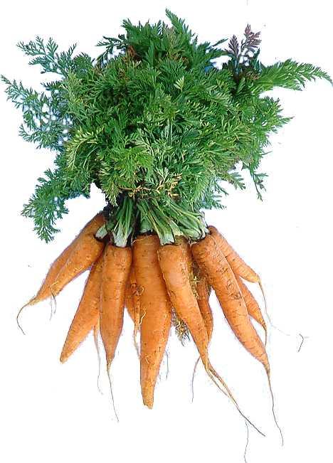 http://fitfoodcoach.files.wordpress.com/2010/02/carrots.jpg